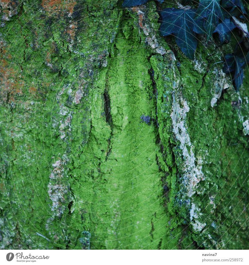 wie ich finde- ne schöne Baumrinde Natur grün Baum Pflanze Holz Moos Efeu