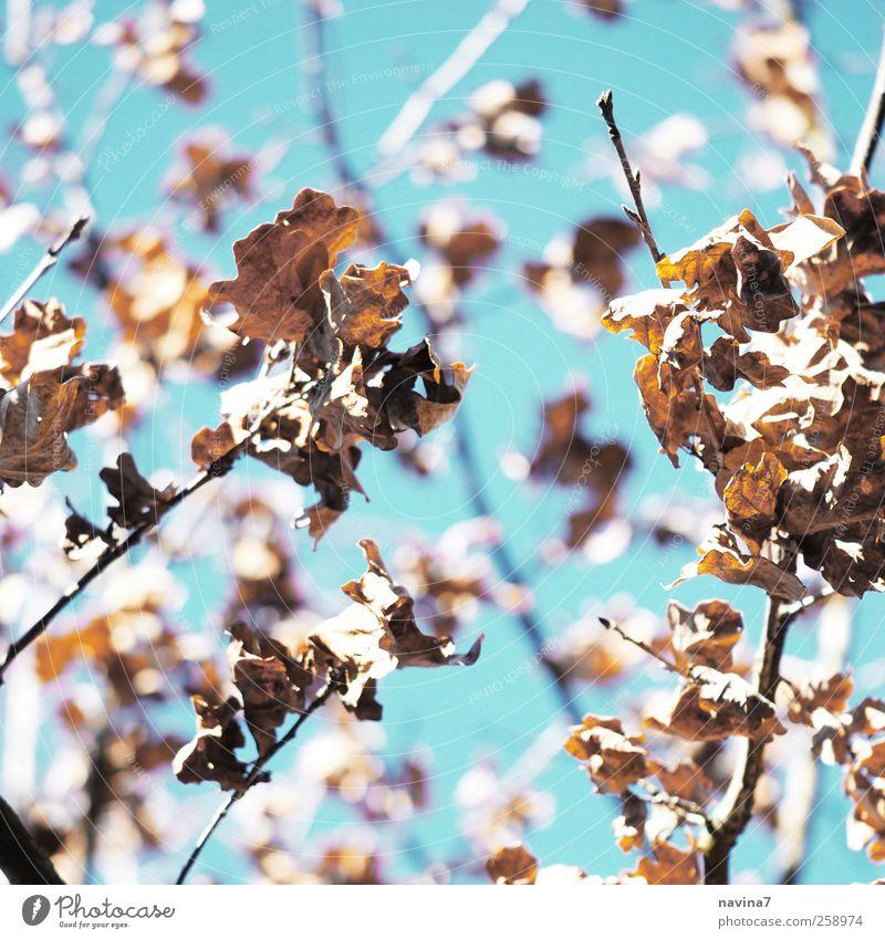 40 Natur blau Baum Pflanze Traurigkeit braun trocken schrumplig