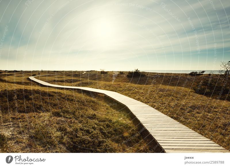 Neuanfang Landschaft Himmel Sonne Schönes Wetter Wiese Wege & Pfade gehen Wärme blau braun grün Zufriedenheit Vorfreude ruhig Hoffnung Heimweh Fernweh Bohlenweg