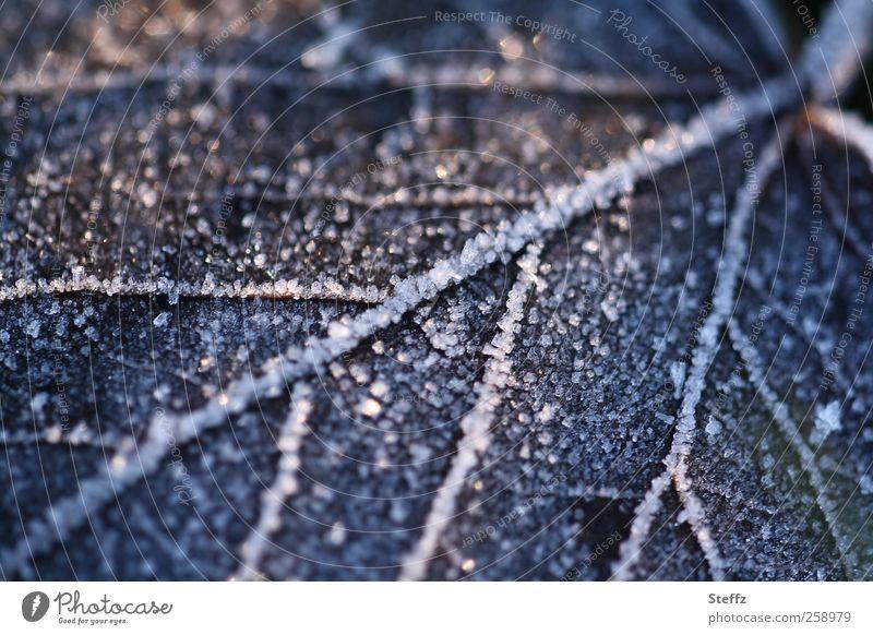 vereistes Blatt auf dem Waldboden im Dezember Kälteschock Kälteeinbruch Wintereinbruch heimisch nordisch Winterstille nordische Romantik nordische Kälte Raureif