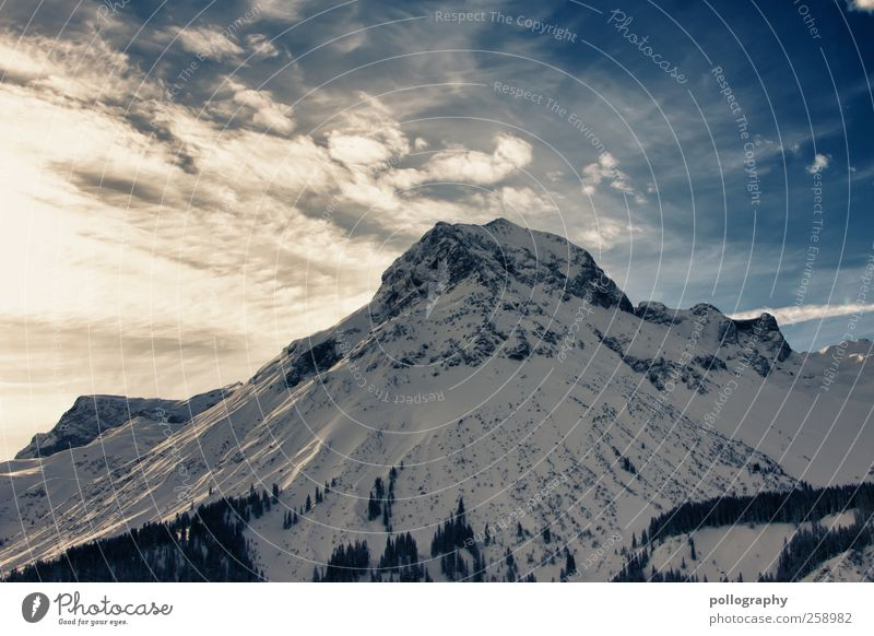 Weißer Riese Natur Landschaft Pflanze Himmel Wolken Sonne Sonnenlicht Winter Schönes Wetter Baum Tanne Hügel Felsen Alpen Berge u. Gebirge Gipfel