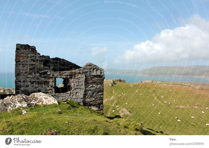 Monument Natur Landschaft Pflanze Tier Erde Luft Wasser Himmel Wolken Schönes Wetter Gras Wiese Feld Hügel Küste Bucht Meer Republik Irland Ruine Nutztier Schaf