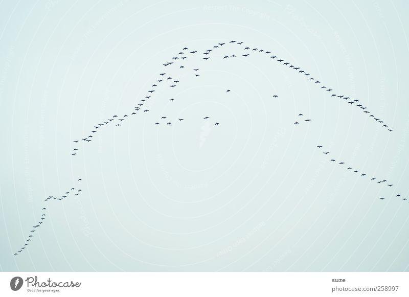 Pauschalreise Freiheit Umwelt Tier Urelemente Luft Himmel Wolken Klima Wildtier Vogel Tiergruppe Schwarm Bewegung fliegen frei hell viele Lebensfreude Sehnsucht