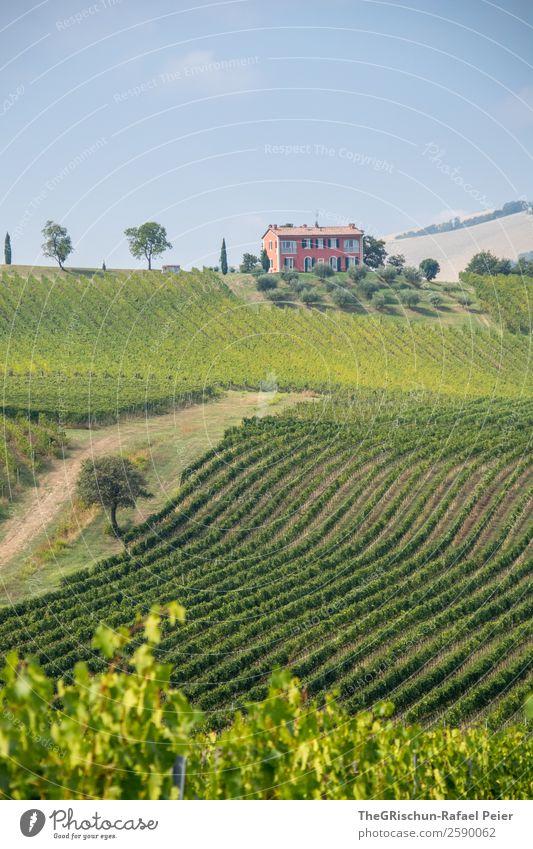Haus Landschaft blau grün rosa Linie Wein Baum Weinberg Weintrauben Italien Himmel Hügel Farbfoto Außenaufnahme Menschenleer Textfreiraum unten Tag