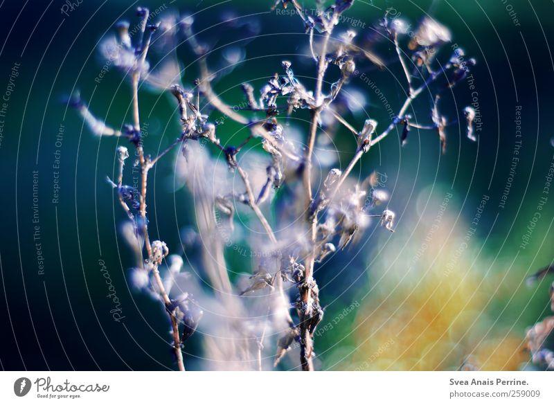 . schön Pflanze Wiese Frühling natürlich frisch Hoffnung Sträucher Schönes Wetter Lichtpunkt