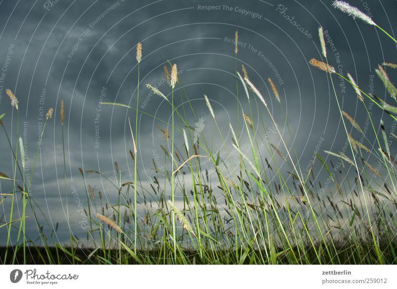 Getreide Tourismus Ausflug Sommer Umwelt Natur Landschaft Pflanze Wolken Horizont Herbst Klima Klimawandel Wetter schlechtes Wetter Unwetter Wind Gewitter Gras