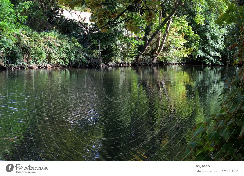 Grünes Ufer Wellness Leben harmonisch ruhig Schwimmen & Baden Freizeit & Hobby Camping Sommer Sommerurlaub wandern Umwelt Natur Tier Wasser Herbst Klima