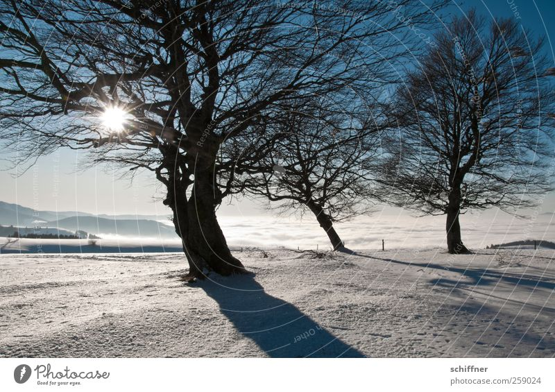 Und es gibt doch Sonne! Umwelt Natur Landschaft Pflanze Sonnenlicht Winter Klima Schönes Wetter Eis Frost Schnee Baum Gipfel Schneebedeckte Gipfel fantastisch