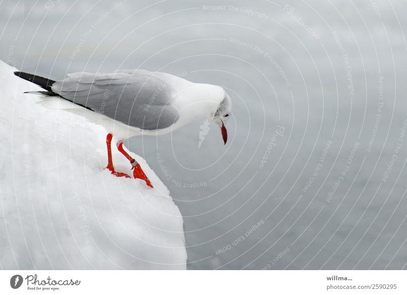 angst. kalte füße. emotionen Winter Schnee Textfreiraum Höhenangst Möwe Nahrungssuche