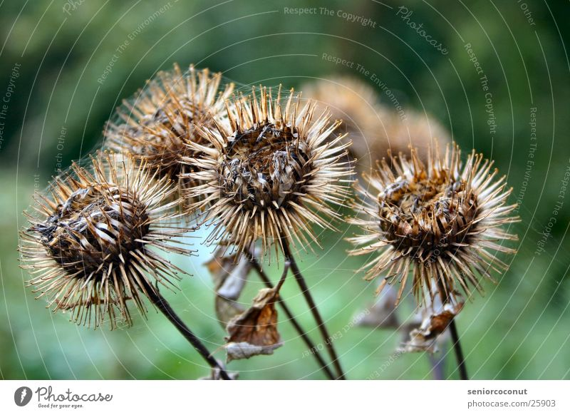Am Ende Pflanze Stachel verblüht Spinnennetz