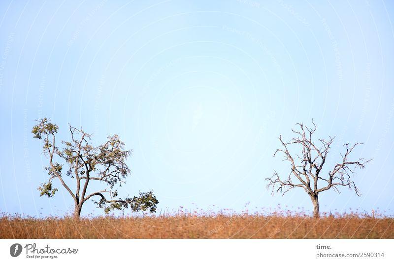 Fuchtelbäumchen Himmel Herbst Schönes Wetter Baum Baumkrone Ast Wiese stehen frei Fröhlichkeit natürlich Neugier rebellisch wild Freude selbstbewußt Sympathie