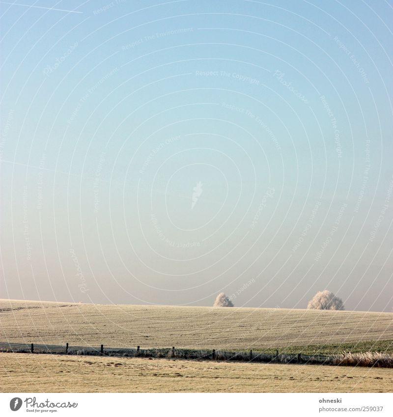 Frostbeulen Landschaft Erde Luft Himmel Wolkenloser Himmel Winter Eis Baumkrone Feld kalt Einsamkeit Horizont Idylle ruhig Ferne Farbfoto Gedeckte Farben