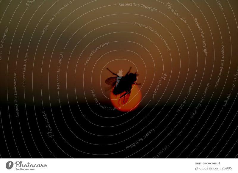 Trip Around The Sun Sonnenuntergang Fensterscheibe Insekt Makroaufnahme Nahaufnahme Fliege Flügel