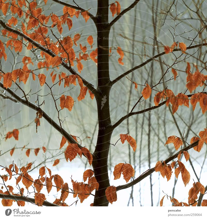 buchenfeuer Natur Wasser Baum rot Pflanze Winter Blatt Wald Schnee Umwelt Landschaft Stimmung Regen Wetter Eis Nebel