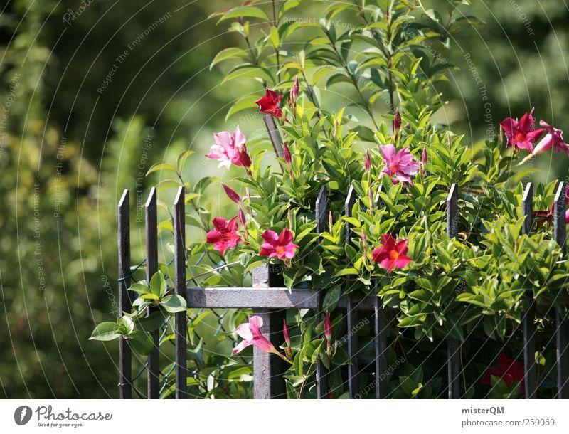 Garten. Kunst ästhetisch Gartenbau Gartenzaun Gartenfest grün Grünpflanze Blüte Blühend Sommer Natur Farbfoto Gedeckte Farben Außenaufnahme Nahaufnahme