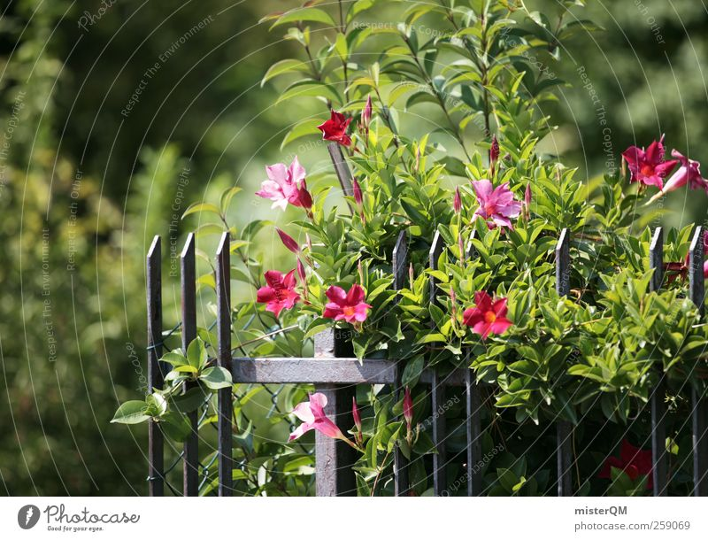 Garten. Natur grün Sommer Garten Blüte Kunst ästhetisch Blühend Gartenbau Grünpflanze Gartenzaun Gartenfest