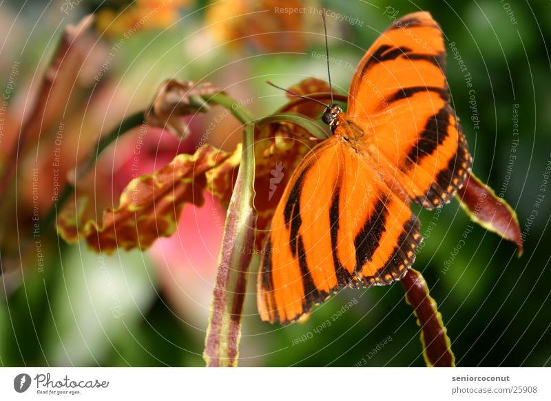 Wirklich Blume Farbe orange Flügel Insekt Schmetterling Orchidee Fühler