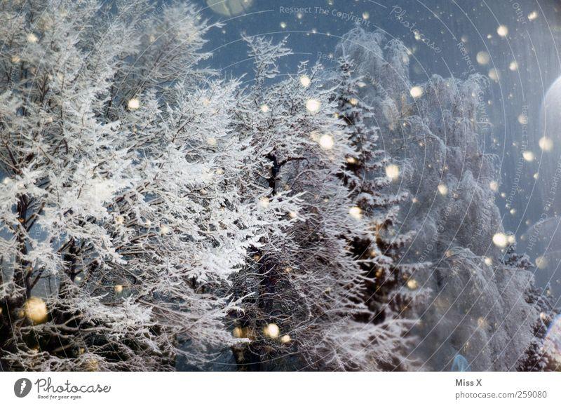 Wintermärchen I Nachthimmel schlechtes Wetter Eis Frost Schnee Schneefall Baum Wald kalt Punkt Schneeflocke Ast Winterwald Winterstimmung Farbfoto Außenaufnahme