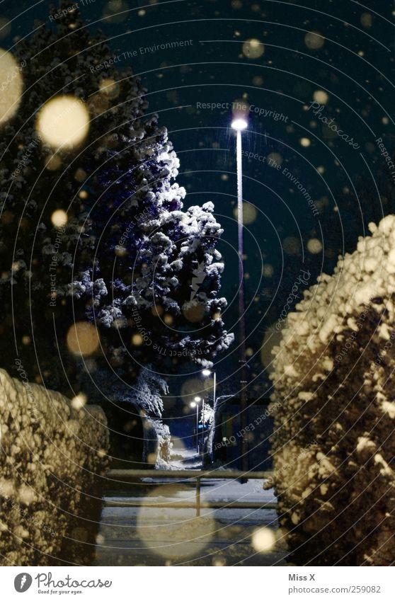 Wintermärchen III Nachthimmel schlechtes Wetter Eis Frost Schnee Schneefall Baum Garten kalt Schneeflocke Winterstimmung Punkt Farbfoto Außenaufnahme