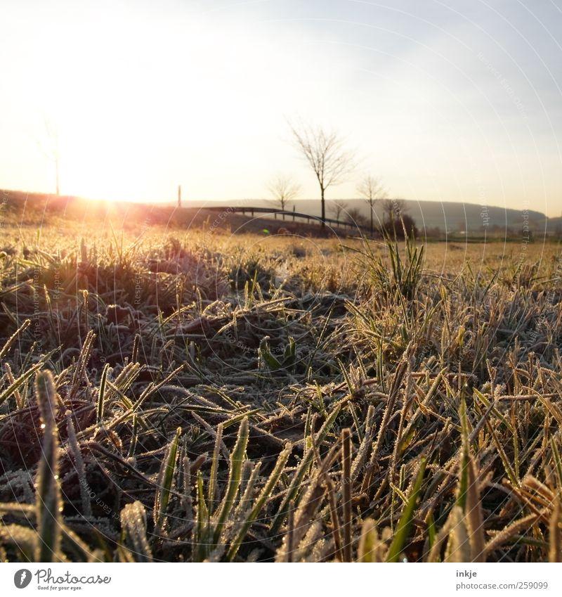 früher Frost Umwelt Landschaft Himmel Sonne Sonnenaufgang Sonnenuntergang Sonnenlicht Winter Eis Baum Gras Wiese Feld Stadtrand Menschenleer Straße Wege & Pfade
