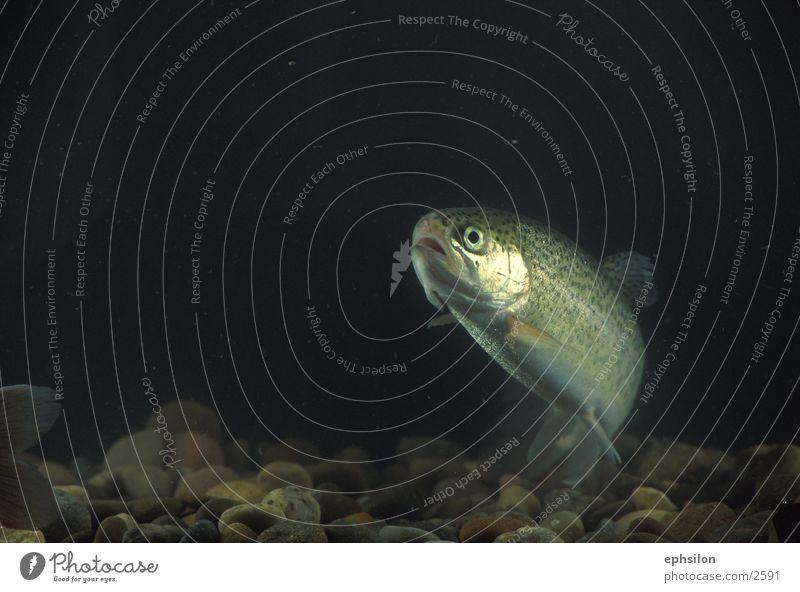 Fisch Verkehr Aquarium