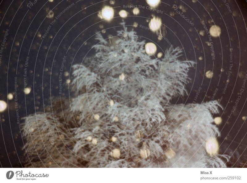 andere Welt Winter schlechtes Wetter Schnee Schneefall Baum kalt Schneeflocke Winterstimmung Farbfoto Gedeckte Farben Außenaufnahme Menschenleer Nacht