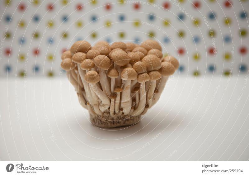 Buchenpilze mit Punkthintergrund organisch Pilz Japanisch Bunapi weiß Lebensmittel Wachstum Stillleben Vor hellem Hintergrund Freisteller Pilzhut viele