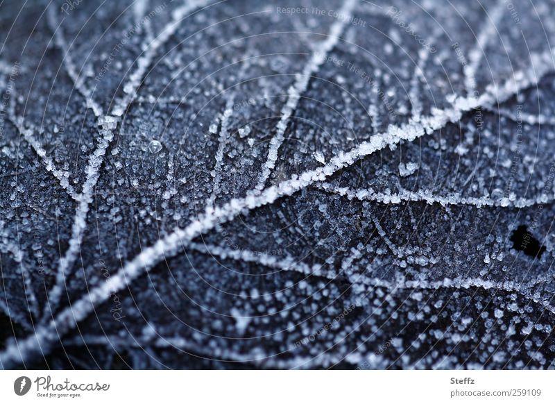 Raureif auf einem gefallenen Blatt im Dezember Kälteschock nordisch Kälteeinbruch Wintereinbruch nordische Kälte heimisch Frost Winterkälte Kältegefühl
