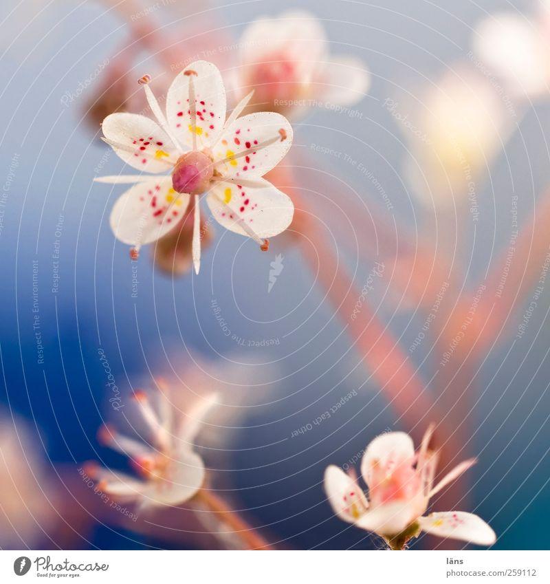 ich bin klein mein herz ist .... Pflanze Blume Blüte Blühend Wildpflanze Sukkulenten