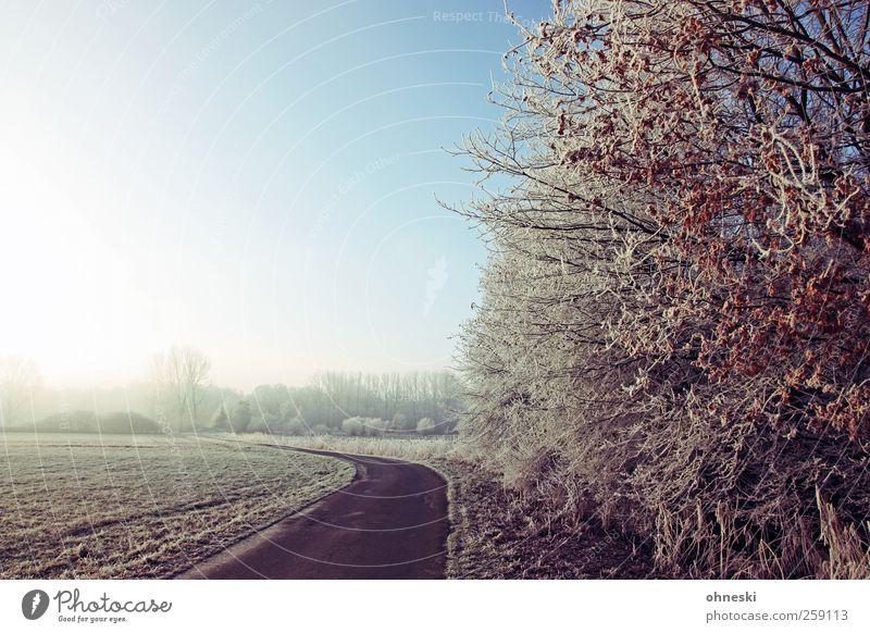 Street Spirit Baum Winter Einsamkeit Ferne Straße Landschaft Wege & Pfade Horizont Eis Feld Zukunft Hoffnung Frost Sträucher