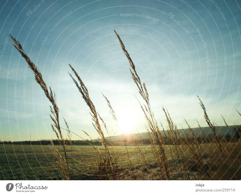 Früh auf den Feldern Umwelt Natur Landschaft Pflanze Himmel Wolken Sonne Sonnenaufgang Sonnenuntergang Sonnenlicht Herbst Klima Wetter Schönes Wetter Gras Wiese