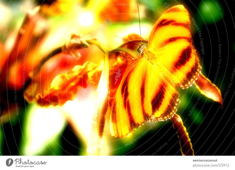 Unwirklich Blume Farbe orange Flügel Insekt Schmetterling Orchidee Fühler