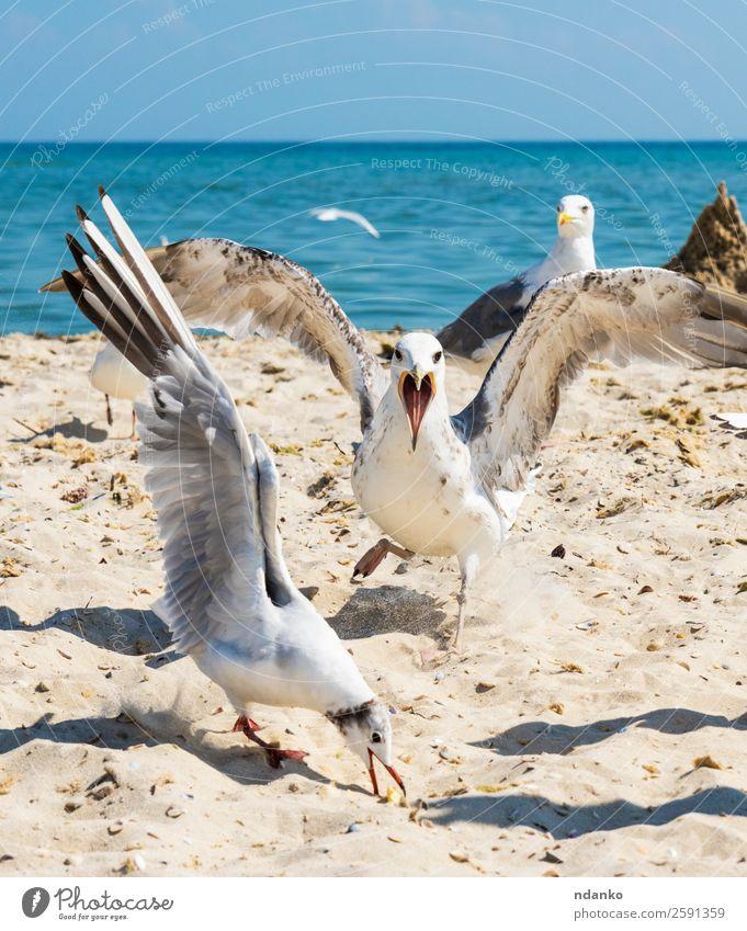 Himmel Natur Ferien & Urlaub & Reisen Sommer blau weiß Landschaft Meer Tier Strand schwarz Umwelt natürlich Küste Freiheit Vogel