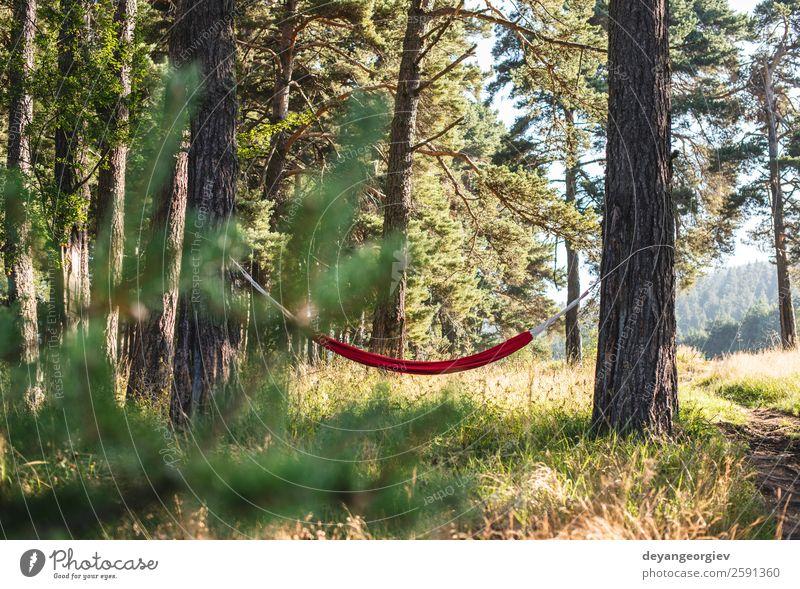 Hängematte im Wald Lifestyle schön Erholung Freizeit & Hobby Ferien & Urlaub & Reisen Camping Sommer Sonne Natur Landschaft Baum Park grün rot Farbe Idylle