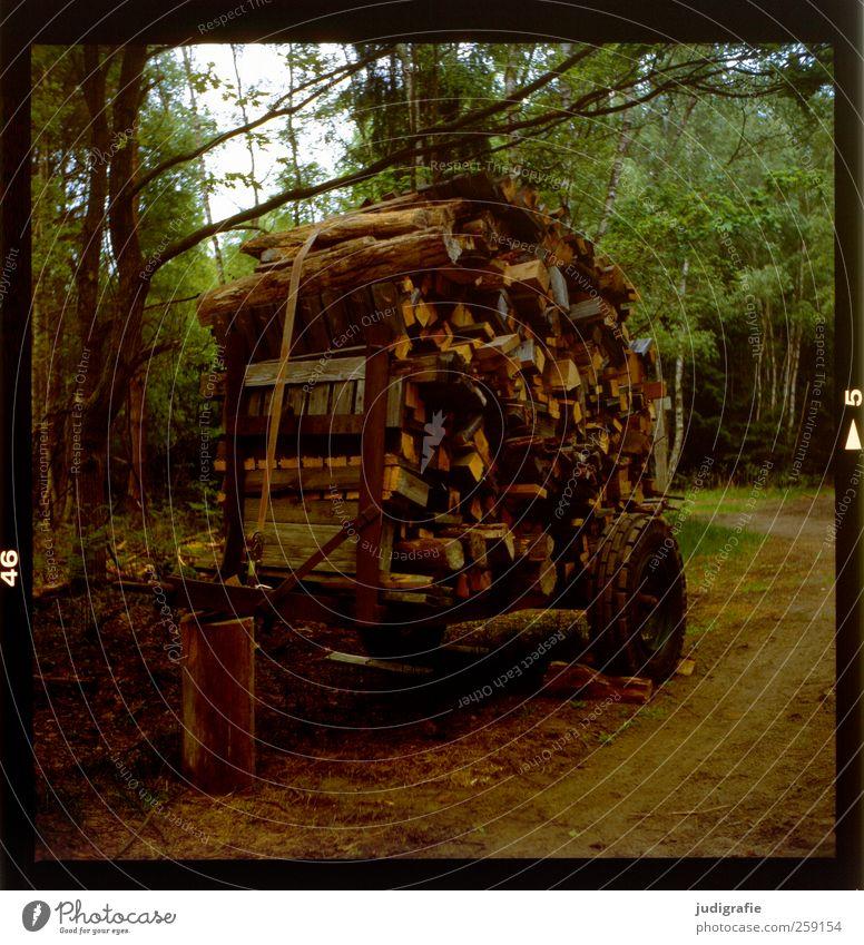Holz Umwelt Natur Landschaft Pflanze Baum Wald Brennholz Wagen Sammlung Vorrat Stapel Farbfoto Außenaufnahme Menschenleer