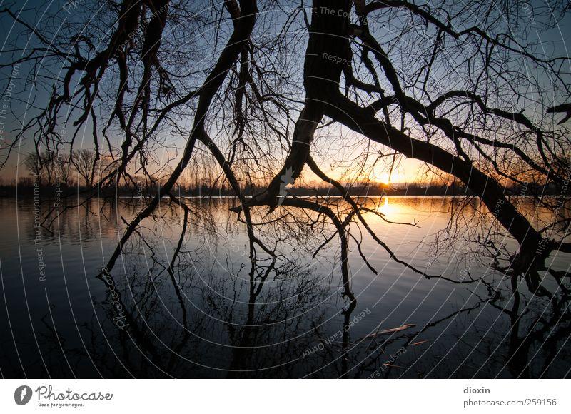 Till The End Of The Day Umwelt Natur Landschaft Wasser Himmel Wolkenloser Himmel Sonne Sonnenaufgang Sonnenuntergang Sonnenlicht Pflanze Baum Ast Zweige u. Äste