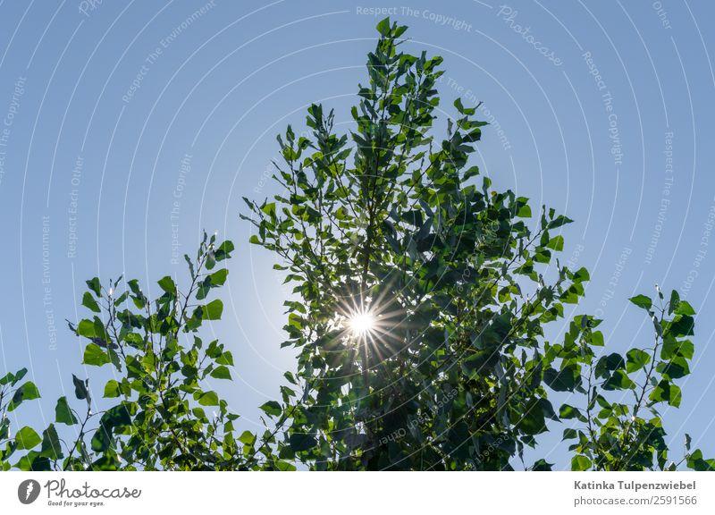 Gegenlichtaufnahme mit Baum Umwelt Natur Landschaft Himmel Stern Sonne Sonnenlicht Sommer Schönes Wetter Blatt Park blau gold grün schön Sonnenstern