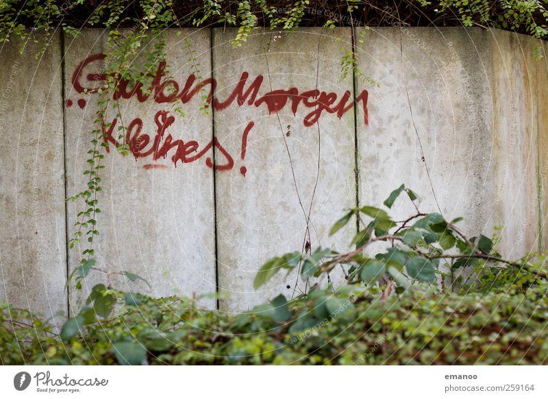 Guten Morgen Kleines! grün schön rot Pflanze Freude Liebe Wand Graffiti klein Stein Stil Mauer Freundschaft Zusammensein Lifestyle Sträucher