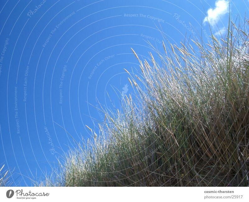Watch the sky Himmel grün blau Pflanze Wolken Stranddüne