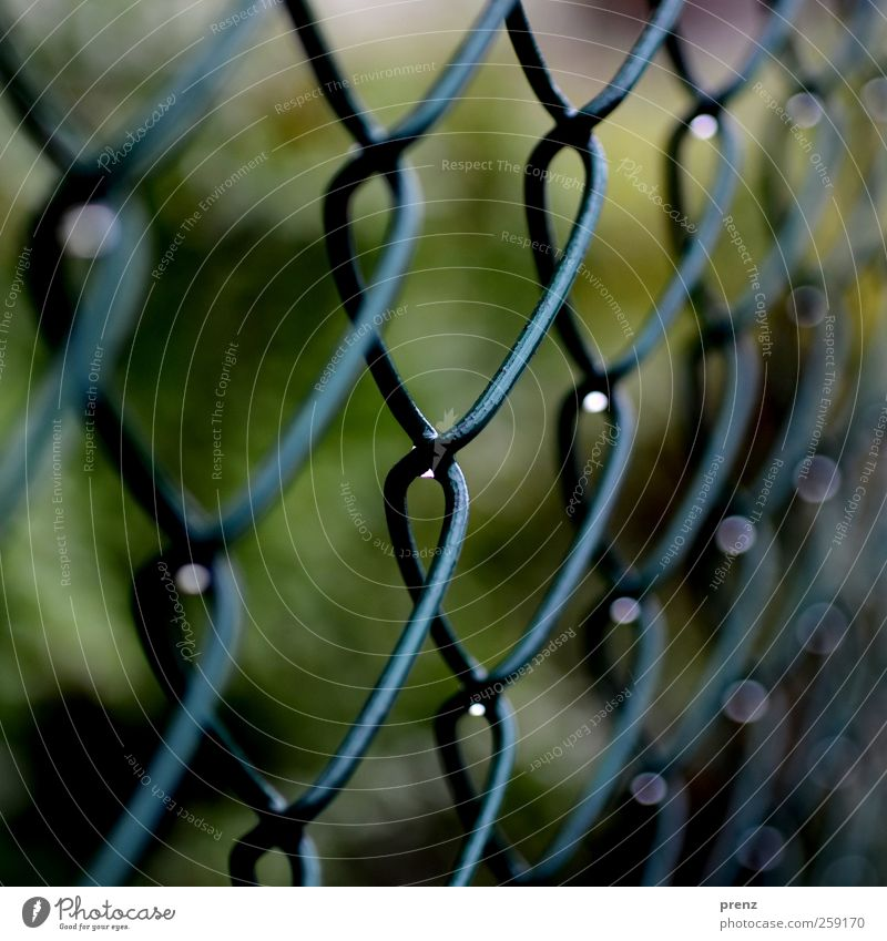 nasse maschen Linie Tropfen grün Regenwasser Wasser Wassertropfen Zaun Maschendrahtzaun Farbfoto Außenaufnahme Tag Schwache Tiefenschärfe Zentralperspektive