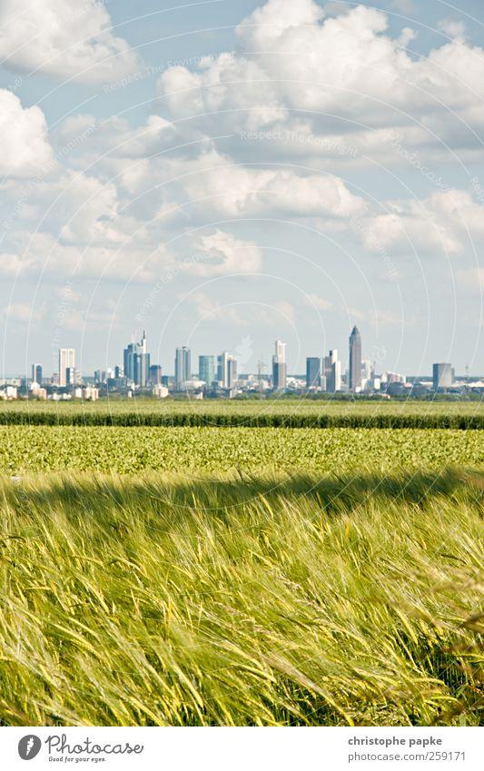 Mitten im Grünen Himmel Stadt Wolken Umwelt Wiese Feld Geldinstitut Skyline Frankfurt am Main Börse Stadtrand Europa