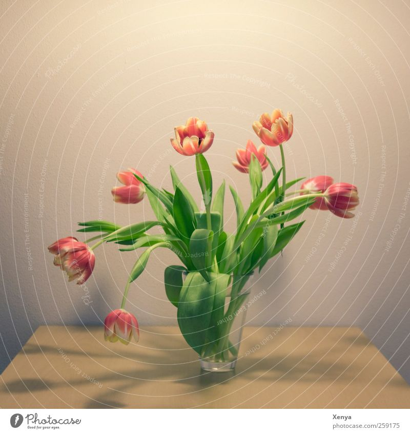 Neun Pflanze grün Blume rot gelb Blühend retro Romantik zart Blumenstrauß Tulpe Frühlingsgefühle Blumenvase Vase Knollengewächse