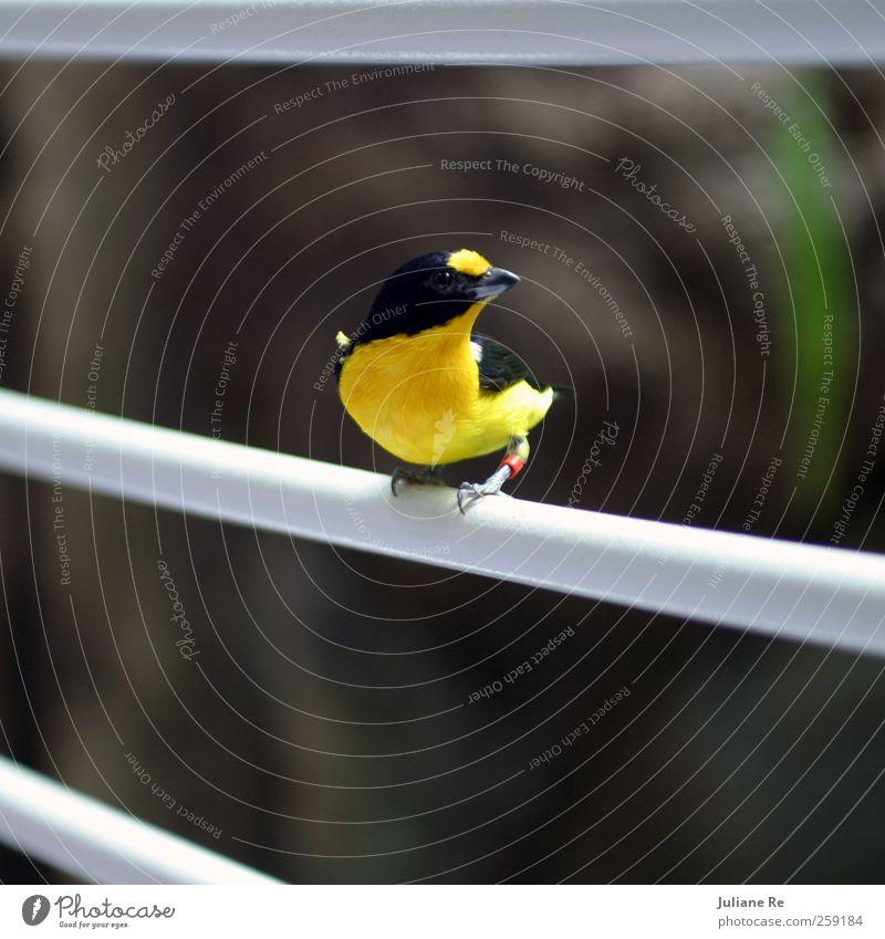 Zu Besuch | Expedition Himmel Natur Ferien & Urlaub & Reisen Tier ruhig Umwelt gelb Wiese Bewegung Stein Garten Metall Luft Vogel Park Linie