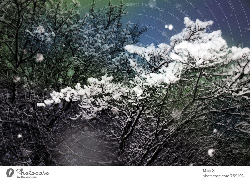 Wintermärchen IV Natur Nachthimmel schlechtes Wetter Eis Frost Schnee Schneefall Baum Wald dunkel kalt Ast Zweige u. Äste Farbfoto mehrfarbig Außenaufnahme