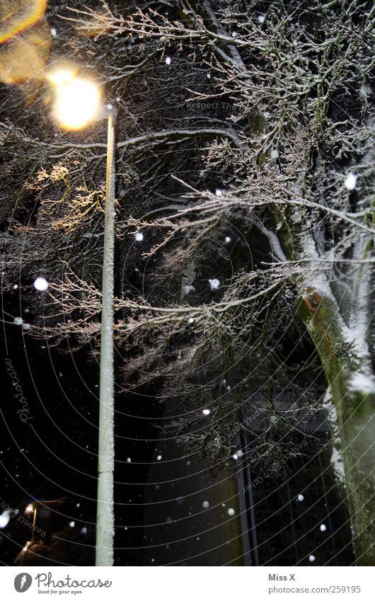 Wintermärchen V Baum kalt dunkel Schnee Schneefall Straßenbeleuchtung Nachthimmel schlechtes Wetter