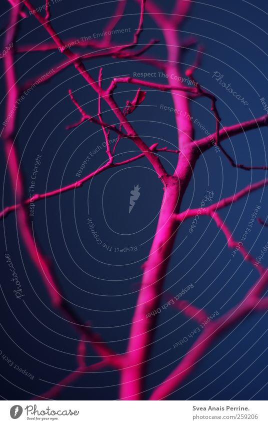 natürlicher trash. Zweig Ast Zweige u. Äste Mauer Wand trashig blau rosa verzweigt Farbfoto mehrfarbig Innenaufnahme Menschenleer Schwache Tiefenschärfe