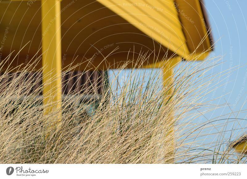 Inselleben Himmel blau Pflanze Haus gelb Architektur Holz Gras Gebäude Fassade Bauwerk Dorf Düne Hütte Dachgiebel Holzhaus