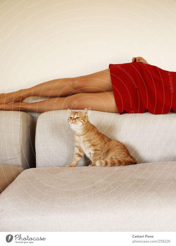 verführter Tiger. Körper feminin Frau Erwachsene 1 Mensch Mode Bekleidung Kleid Strumpfhose Tier Haustier Katze Erholung genießen hängen liegen ästhetisch