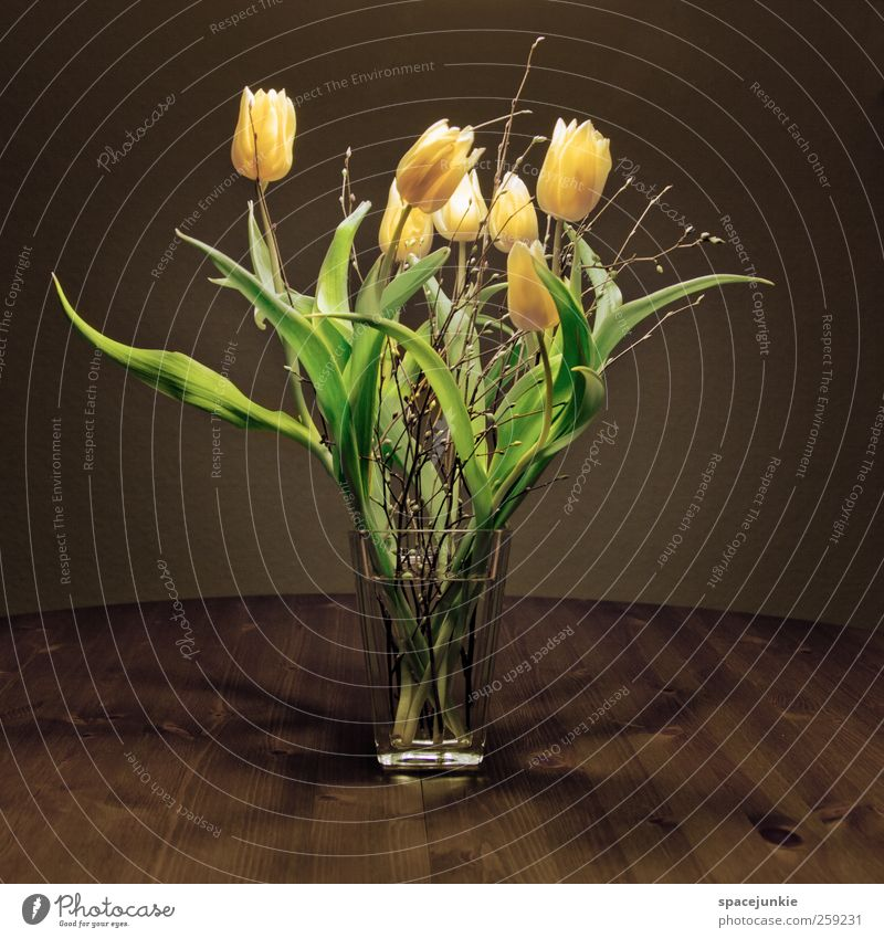 Frühling Pflanze Tulpe Duft träumen dunkel gelb Frühlingsgefühle Hoffnung Blume Blumenstrauß grün Glas Behälter u. Gefäße frisch Tisch Holz Farbfoto