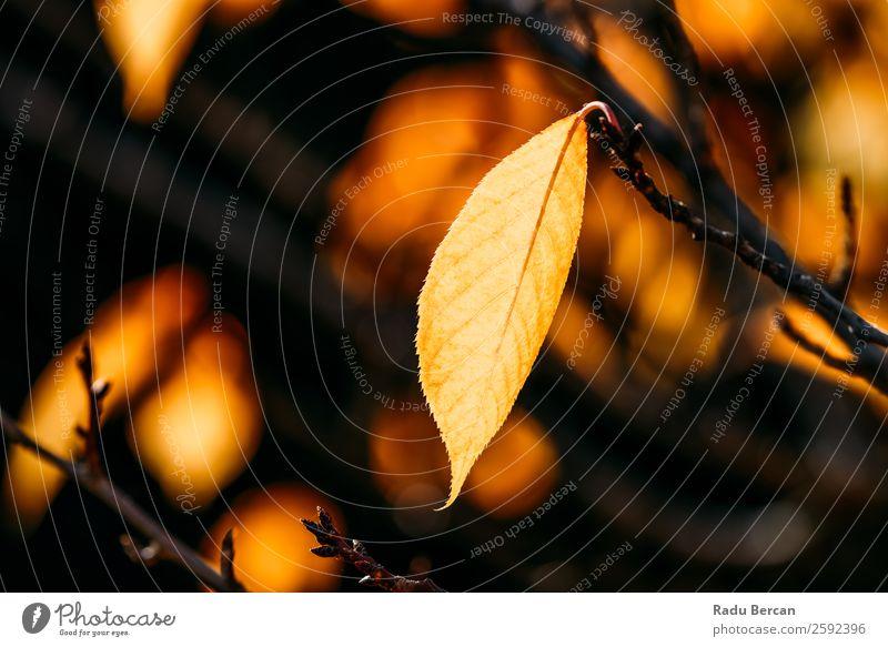 Gelbe und orange Herbstbaumblätter in der Herbstsaison Garten Umwelt Natur Landschaft Pflanze Schönes Wetter Baum Blume Blatt Blüte Grünpflanze Park Wald fallen
